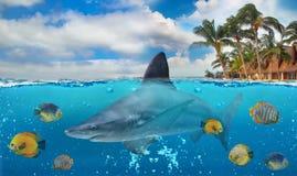 Μισή υποβρύχια φωτογραφία του τροπικού παραδείσου με μια ομάδα ζωηρόχρωμων ψαριών και μεγάλου καρχαρία στοκ εικόνες με δικαίωμα ελεύθερης χρήσης