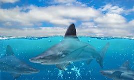 Μισή υποβρύχια φωτογραφία του τροπικού παραδείσου με μια ομάδα μεγάλων καρχαριών στο Ειρηνικό Ωκεανό στοκ εικόνες