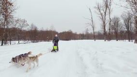 ΜΟΝΑΔΙΚΟΙ ΕΝΑΕΡΙΟΙ ΠΥΡΟΒΟΛΙΣΜΟΙ ΚΗΦΗΝΩΝ, γεροδεμένο πακέτο που τρέχουν στο χιόνι με τους ανθρώπους αναψυχής πίσω από τους που τρα απόθεμα βίντεο