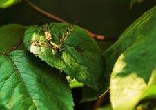 Μύγα γερανών στοκ φωτογραφίες