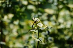 Μύγα γερανών στοκ εικόνες