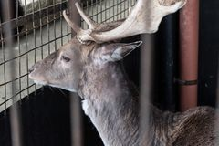 Μόνο Gazelle σε ένα κλουβί στοκ φωτογραφίες