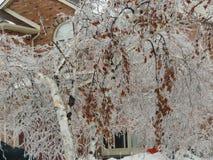 Μπέρλινγκτον Οντάριο Καναδάς το χειμώνα στοκ φωτογραφία