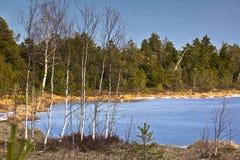 Μπλε κωνοφόρο σημύδων λιμνών στοκ εικόνα