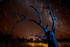 Μπλε δέντρο, πορτοκαλής ουρανός, ίχνη αστεριών στοκ φωτογραφία