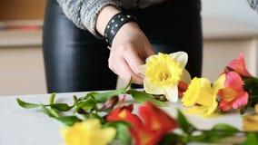 Νάρκισσοι χόμπι σύνθεσης λουλουδιών ντεκόρ ανθοκόμων φιλμ μικρού μήκους