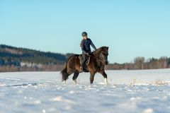 Νέα σουηδική γυναίκα που οδηγά το ισλανδικό άλογό της σε έναν χιονισμένο τομέα στοκ φωτογραφίες με δικαίωμα ελεύθερης χρήσης