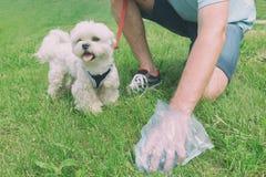 Να πάρει το επίστεγο σκυλιών στοκ φωτογραφία με δικαίωμα ελεύθερης χρήσης