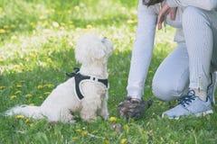 Να πάρει το επίστεγο σκυλιών στοκ εικόνες με δικαίωμα ελεύθερης χρήσης