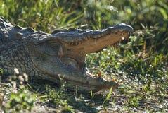 Νείλος cocodrile στοκ φωτογραφίες