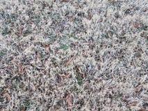 Νεκρός καφετής χλόη ή χορτοτάπητας το χειμώνα με τα φύλλα στοκ εικόνες