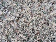 Νεκρός καφετής χλόη ή χορτοτάπητας το χειμώνα με τα φύλλα στοκ εικόνες με δικαίωμα ελεύθερης χρήσης
