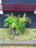 Ντεκόρ προαυλίων στην ολλανδική επαρχία - λουλούδια στοκ εικόνα