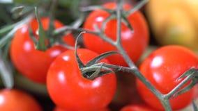 Ντομάτες και καρυκεύματα λεμονιών απόθεμα βίντεο