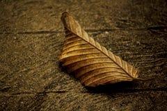 Ξεράνετε τα φύλλα που αφόρησαν το πάτωμα τσιμέντου στοκ φωτογραφία με δικαίωμα ελεύθερης χρήσης