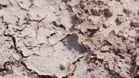 Ξεράνετε τη ραγισμένη γη στην κινηματογράφηση σε πρώτο πλάνο ερήμων Ισχυρή θερμότητα Ένα άγονο έδαφος απόθεμα βίντεο