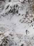 Ξηρά χλόη κάτω από το λούστρο χιονιού στοκ εικόνες