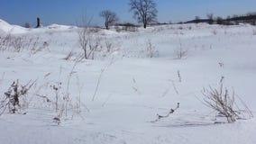 Ξηρές ταλαντεύσεις χλόης στο χιόνι στον αέρα Φεβρουάριος απόθεμα βίντεο