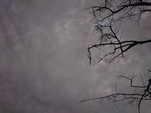 ξηροί κλαδίσκοι δέντρων στα πλαίσια του ουρανού όταν it&#x27 s νεφελώδες στοκ εικόνα