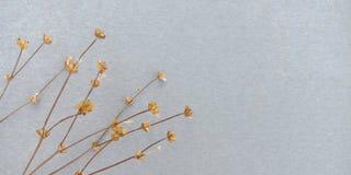 ξηρό λουλούδι ανασκόπηση&s στοκ φωτογραφία με δικαίωμα ελεύθερης χρήσης