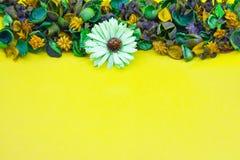 Ξηρό λουλούδι, κίτρινο υπόβαθρο στοκ φωτογραφία με δικαίωμα ελεύθερης χρήσης