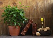 Ξύλα καρυδιάς για μια υγιεινή διατροφή στοκ φωτογραφίες