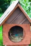 Ξύλινο σπίτι σκυλιών στο του χωριού σπίτι Κατώφλι με το χειροποίητο ξύλινο σπίτι για τα σκυλιά στοκ φωτογραφίες με δικαίωμα ελεύθερης χρήσης