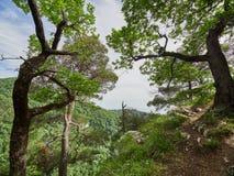 Οι βαλανιδιές αυξάνονται σε έναν απότομο βράχο κάτω από τον οποίο ένα πράσινο δάσος αυξάνεται στοκ φωτογραφία με δικαίωμα ελεύθερης χρήσης