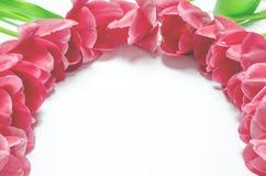 Οι λουλούδι-κόκκινες τουλίπες άνοιξη με τους πράσινους μίσχους βρίσκονται σε ένα άσπρο υπόβαθρο closeup στοκ εικόνα
