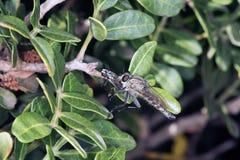 Οι μύγες κάνουν περισσότερες μύγες στοκ εικόνα