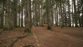Οι νέοι τουρίστες ζευγών περπατούν στα δασικά ξύλα στο καλοκαίρι απόθεμα βίντεο