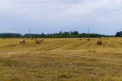 Οι δέσμες του σανού κυλούν στο καλλιεργήσιμο έδαφος, στριμμένος σανός στον τομέα στοκ φωτογραφίες