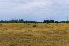 Οι δέσμες του σανού κυλούν στο καλλιεργήσιμο έδαφος, στριμμένος σανός στον τομέα στοκ εικόνα