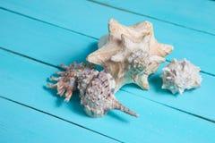 Οι διαφορετικοί τύποι θαλασσινών κοχυλιών κλείνουν επάνω στοκ εικόνα
