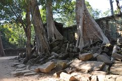 Οι ρίζες των δέντρων ζουγκλών συνδυάζουν με την τεκτονική πετρών των αρχαίων δομών σε Angkor Wat, Καμπότζη στοκ φωτογραφία