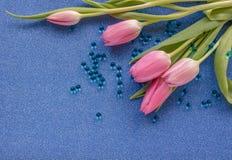 Οι ρόδινες τουλίπες με τις μπλε προσφορές στο μπλε ακτινοβολούν υπόβαθρο με το διάστημα αντιγράφων στοκ εικόνες με δικαίωμα ελεύθερης χρήσης