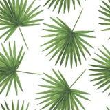 Οι ψηφιακοί τροπικοί κύκλοι εγγράφου σχεδίων ανθίζουν τα φύλλα Hibiscus φοινικών Monstera των βοτανικών διακοσμήσεων Des απεικονί ελεύθερη απεικόνιση δικαιώματος
