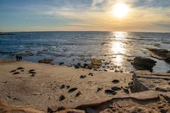 Οι τουρίστες και τα λιοντάρια θάλασσας απολαμβάνουν την παραλία της Λα Χόγια στο Σαν Ντιέγκο στο ηλιοβασίλεμα στοκ εικόνα με δικαίωμα ελεύθερης χρήσης