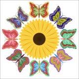 Οκτώ ετερόκλητες όμορφες πεταλούδες και ένα φωτεινό λουλούδι διανυσματική απεικόνιση