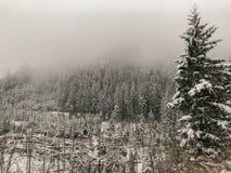 Ομιχλώδες τοπίο βουνών της Misty με το δάσος έλατου στοκ εικόνα με δικαίωμα ελεύθερης χρήσης
