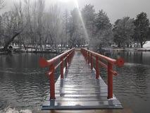Ομορφιά του χειμώνα με το χιόνι στοκ εικόνα με δικαίωμα ελεύθερης χρήσης