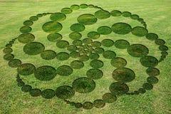 Ομόκεντρο κύκλων κρυπτογραφημένο σπείρες λιβάδι κύκλων συγκομιδών συμβόλων πλαστό ελεύθερη απεικόνιση δικαιώματος