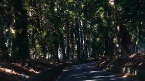 Οδηγώντας πιάτο λεωφόρων κέδρων Suginami  Λεωφόρος κέδρων Suginami σε Nikko απόθεμα βίντεο