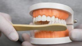 Οδοντίατρος στα άσπρα γάντια που διδάσκει πώς να βουρτσίσει τα δόντια φιλμ μικρού μήκους