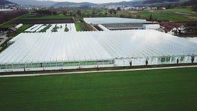 Οργανική καλλιέργεια των φυσικών και φρέσκων λαχανικών απόθεμα βίντεο