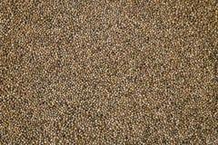 Οργανικός σπόρος κάνναβης Υπόβαθρο σπόρων κάνναβης στη μακροεντολή Τοπ όψη Πολλοί σπόροι καννάβεων Μακρο λεπτομέρεια του σπόρου μ στοκ εικόνες