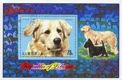 Ουγγρικό τσοπανόσκυλο στοκ εικόνα με δικαίωμα ελεύθερης χρήσης