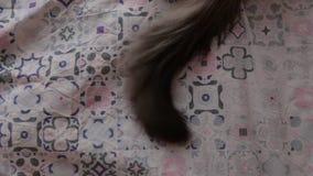 Ουρά της χαριτωμένης Neva γάτας μεταμφιέσεων που βρίσκεται σε ένα κρεβάτι και που κινείται στο σπίτι στο εσωτερικό φιλμ μικρού μήκους