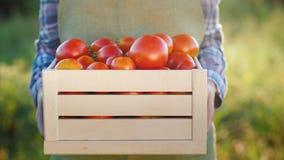 Ο αγρότης κρατά ένα ξύλινο κιβώτιο με τις ντομάτες Φρέσκα αγροτικά προϊόντα απόθεμα βίντεο