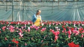 Ο γυναικείος ανθοκόμος παρατηρεί τα ανθίζοντας λουλούδια στην πρασινάδα φιλμ μικρού μήκους